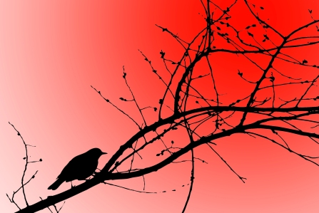 bird trace 2 red