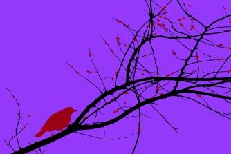 bird trace 3
