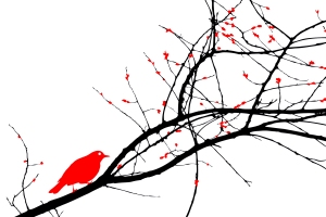 bird trace Red+white