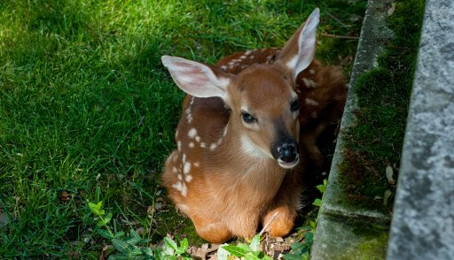 By a stroke of pure, dumb luck, I ran across a fawn while second shooting a wedding.