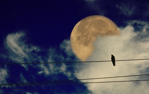 Moon Gestalt Attempt 2