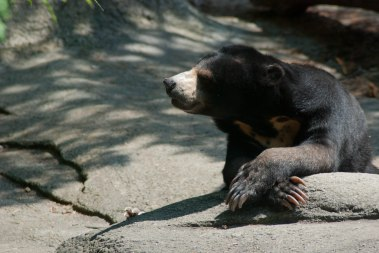 A black bear photo I shot while accompanying Karen to the zoo with the children she babysits.