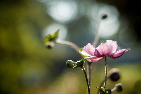 9-10-13 Gilley Flower Edits-14