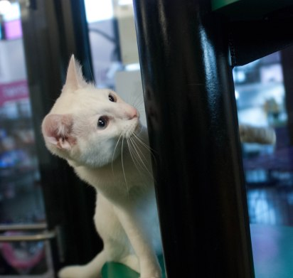 A cat from One Of A Kind Pets plays with my friends during a visit to the animal shelter.