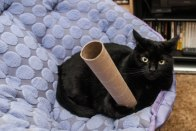 Maxine wielding her cardboard roll of death.