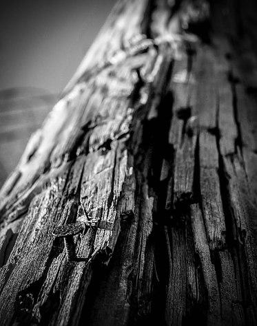 wood 1-2