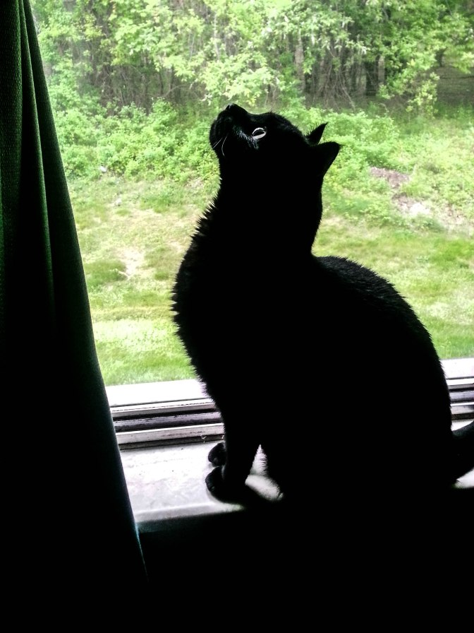 As summer arrives, Max must defend the apartment from ever-fiercer insects.