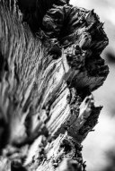 I found a split tree while were hiking and wanted to emphasize the textures in post using high contrast black and white.
