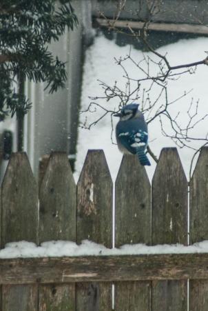 15-2-15 Snow Birds-10