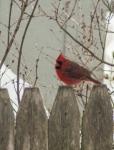 15-2-15 Snow Birds-12
