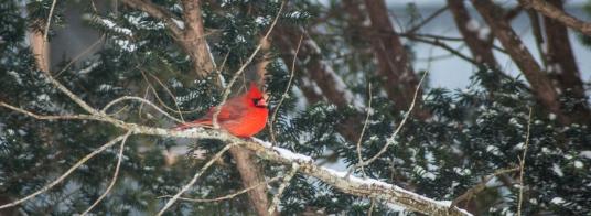 15-2-15 Snow Birds-17