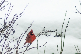 15-2-15 Snow Birds-4