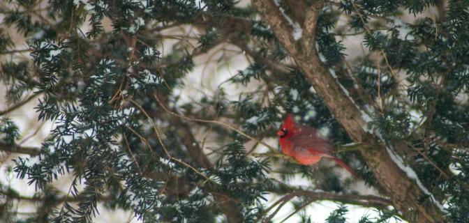 15-2-15 Snow Birds-8