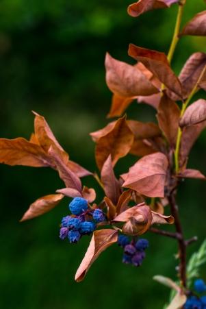 Berry Picking Edits-5